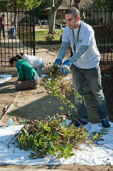Students volunteer at Ronald McDonald House:Senior Biology major Stephen Aguirre joins local Sacramento residents to clean the yards of the Ronald McDonald House on Saturday.:Nicole Lundgren - State Hornet