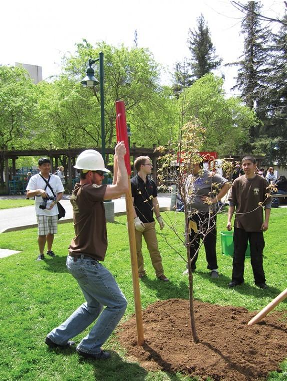 Newly planted trees on campus hope to gain national recognition