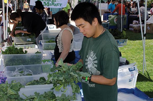 Michael Kwong, senior environmental studies major, bundles wild spinach.