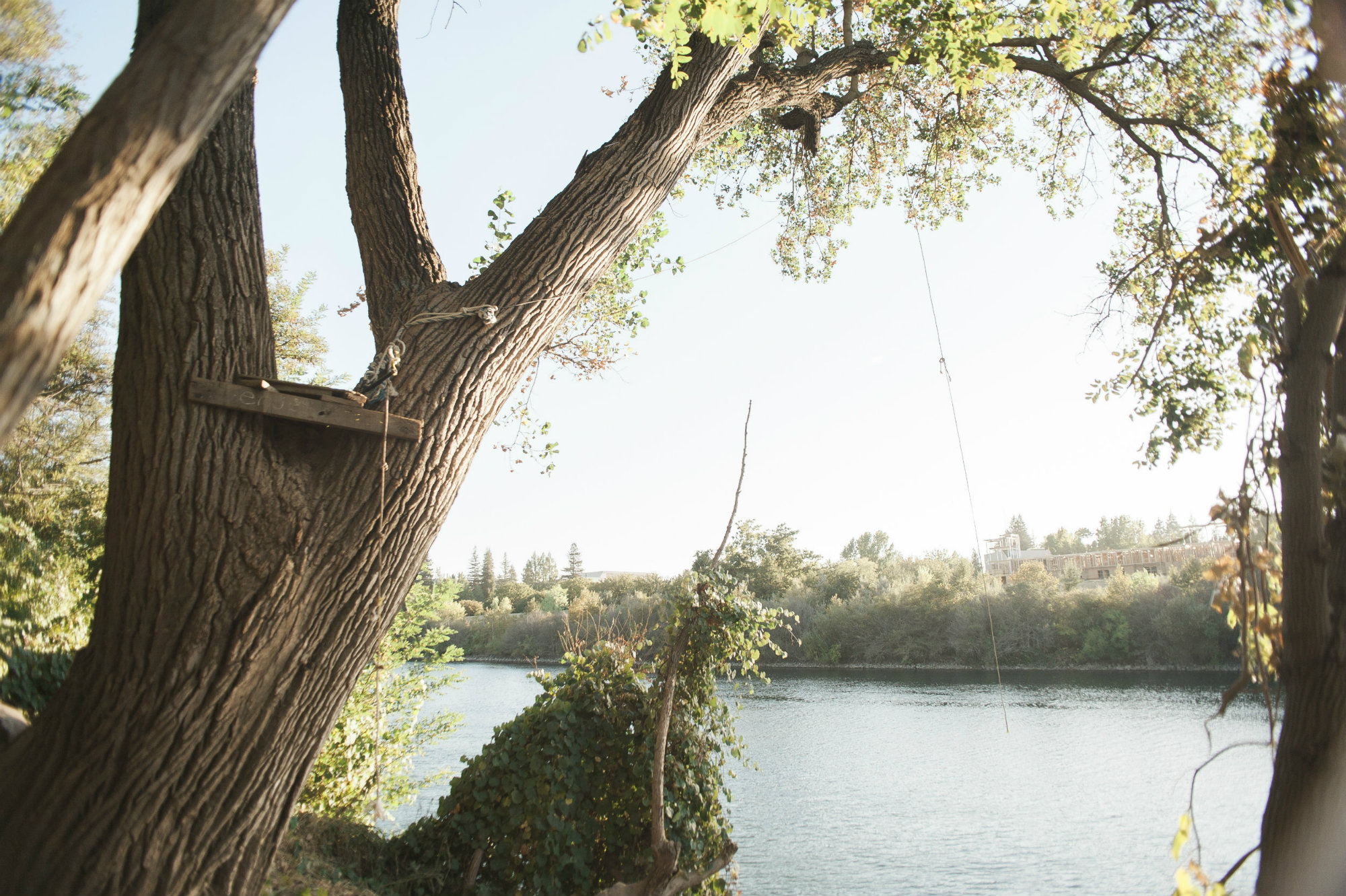 Rope swing by the American River  (Photo by Diana Rykun)