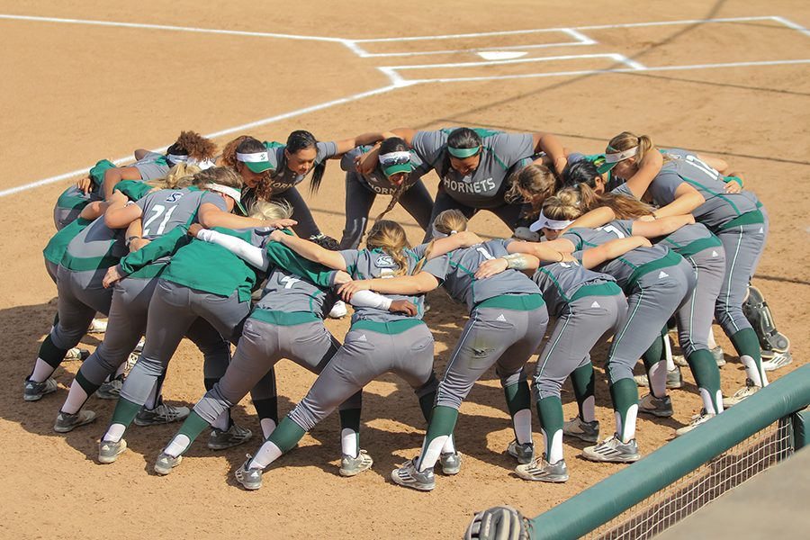 The+Sacramento+State+softball+team+is+projected+to+finish+in+second+place+by+the+Big+Sky+coaches%27+preseason+poll.+Sac+State+finished+last+year+with+a+28-22+overall+record+and+16-6+in+back-to-back+conference+seasons.+%28Photo+by+Matthew+Dyer%29