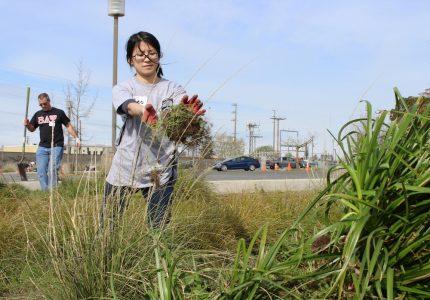 Student volunteers clean up campus weeds, trash as part of Alternative Break