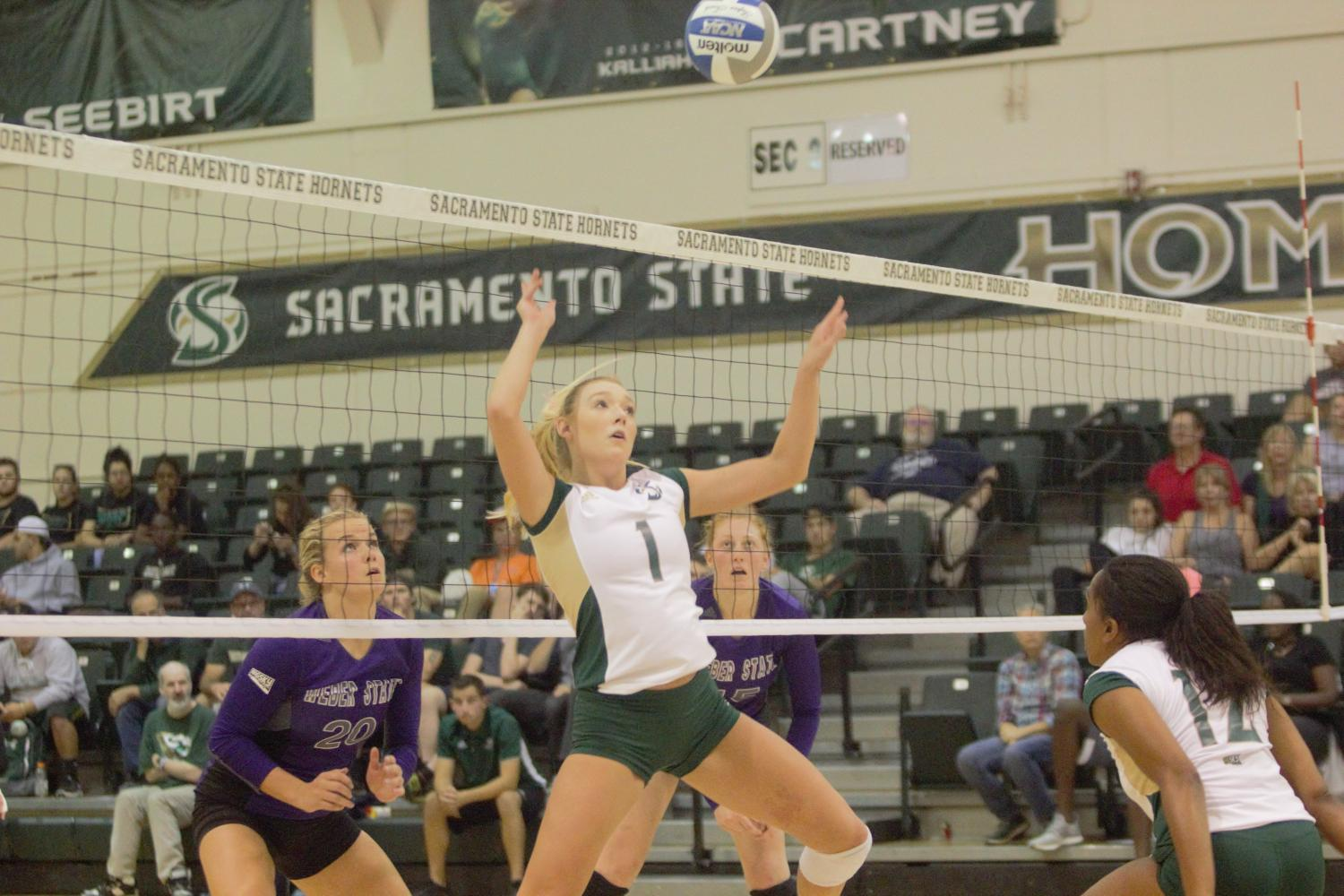 Sacramento State senior setter Kennedy Kurtz sets up an attack play for the Hornets in the first set against Weber State Thursday, Sept. 21 at Colberg Court.