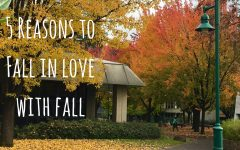 5 reasons to fall in love with fall