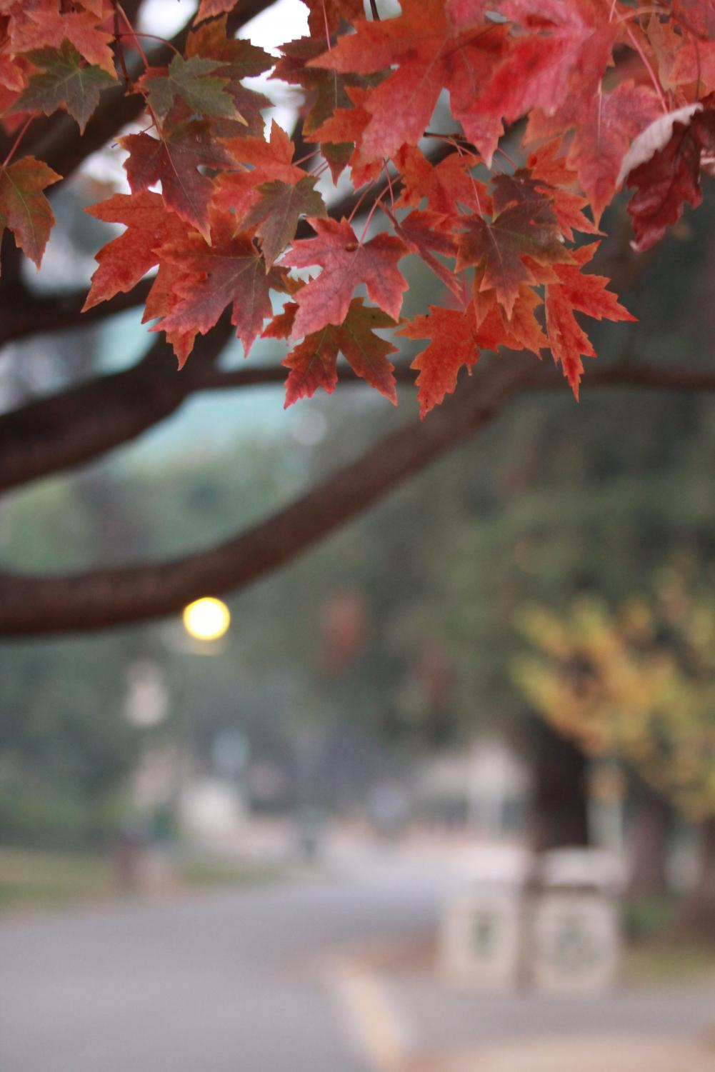 Red+fall+leaves+frame+a+smoky+background+at+Sacramento+State+on+Wednesday.+Regular+classes+and+events+have+been+delayed+and+campus+has+been+closed+due+to+the+poor+air+quality+from+the+smoke+of+the+Camp+Fire+burning+in+Butte+County.