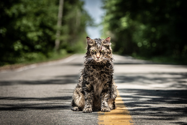%22Pet+Sematary%22+is+a+good+horror+film%2C+but+fails+to+end+on+a+high+note.+Despite+that%2C+%22Pet+Sematary%22+is+one+of+the+best+Stephen+King+adaptations+to+be+put+into+film.+