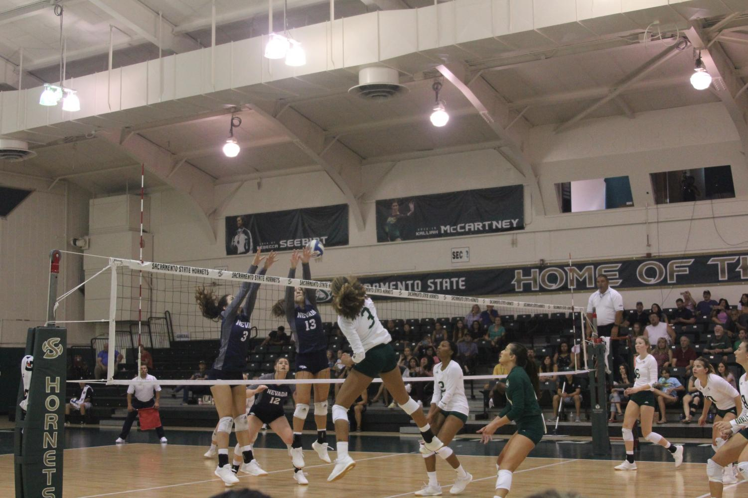 Sac+State+junior+outside+hitter+Macey+Hayden+goes+up+for+the+spike+against+Nevada+on+Saturday%2C+Aug.+3+at+the+Nest.+The+Hornets+won+the+tournament+despite+losing+to+Nevada.