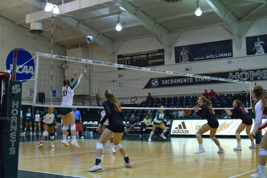 Sac+State+sophomore+setter+Ashtin+Olin+sets+the+ball+against+Southern+Utah+Thursday%2C+Oct.+3+at+The+Nest.+The+Hornets+lost+to+the+Thunderbirds+in+five+sets.