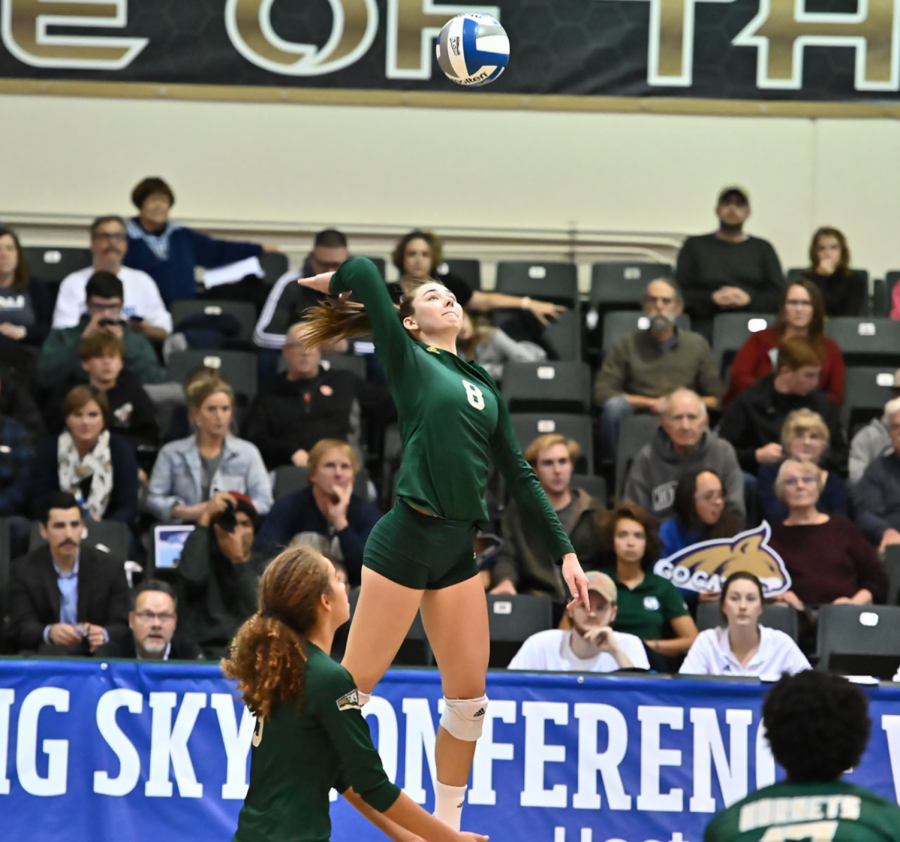 Sac+State+senior+outside+hitter+Sarah+Davis+hits+the+ball+against+Montana+State+on+Thursday%2C+Nov.+28+at+the+Nest.+The+Hornets+were+eliminated+in+the+quarterfinals+of+the+Big+Sky+Tournament+by+the+Bobcats.